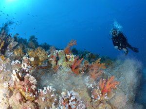 Nurkowanie w Egipcie: gdzie nurkować w Sharm el Sheikh