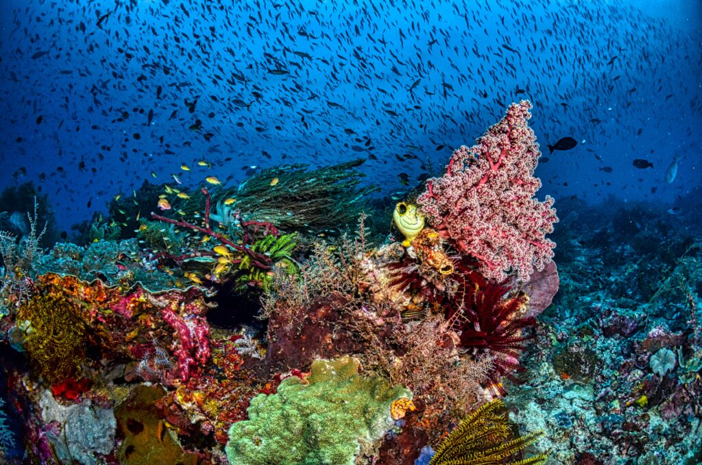 Nurkowanie w Indonezji - rafa koralowa