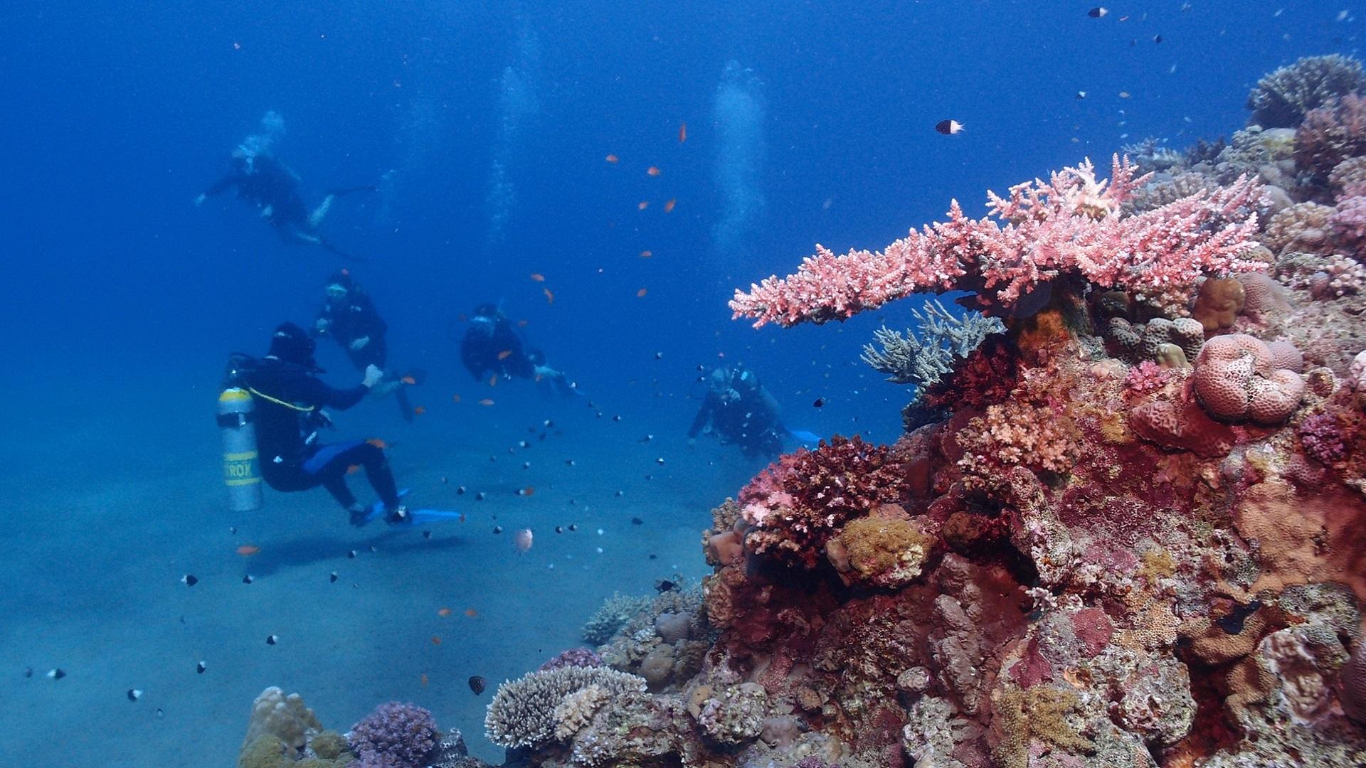 Nurkowanie w Morzu Czerwonym przy rafie koralowej