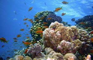 Nurkowanie w Egipcie: Safaga