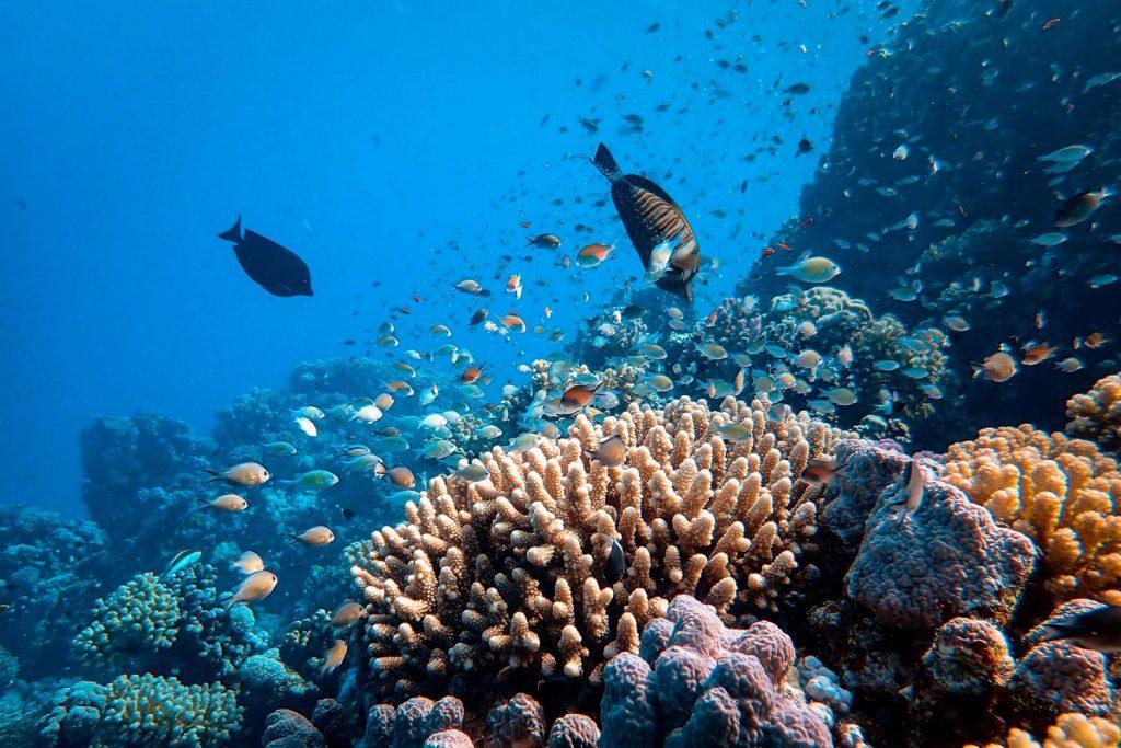 podwodny świat małe ryby pływają przy rafie koralowej wśród koralowców i gąbek
