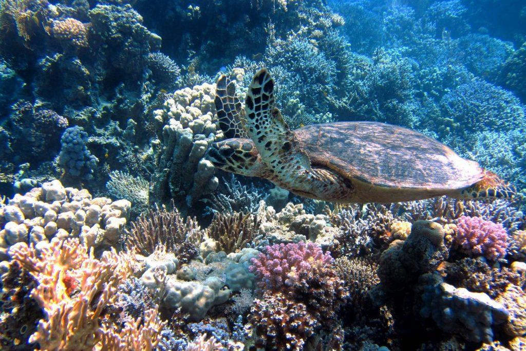 Życie podwodne Zatoka Akaba w Jordanii rafa i żółw