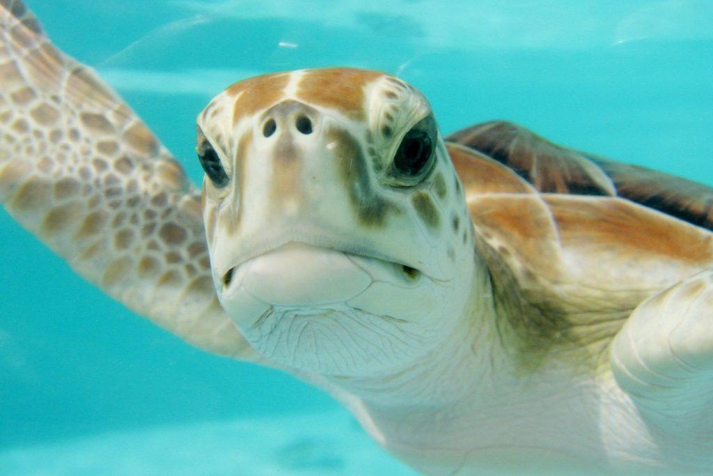 Żółw morski pod wodą w Meksyku