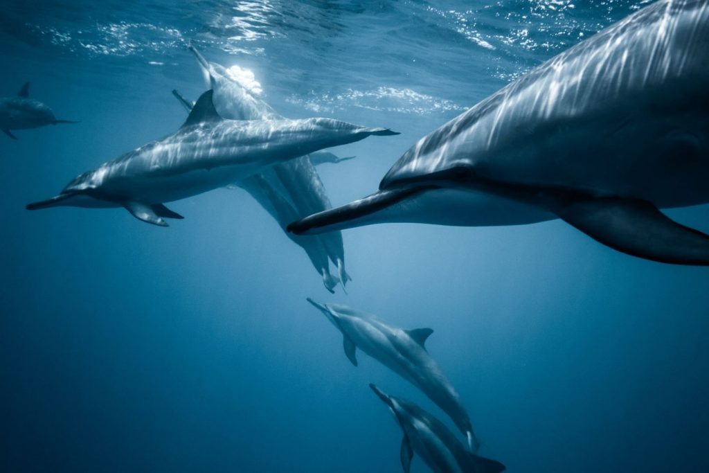 Delfiny butlonode przyjazne ssaki morskie