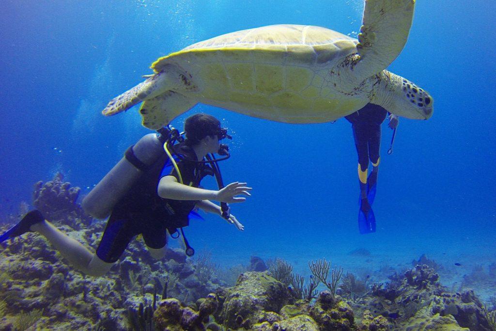 Nurkowie i żółw w Morzu Karaibskim podczas nurkowania w Meksyku
