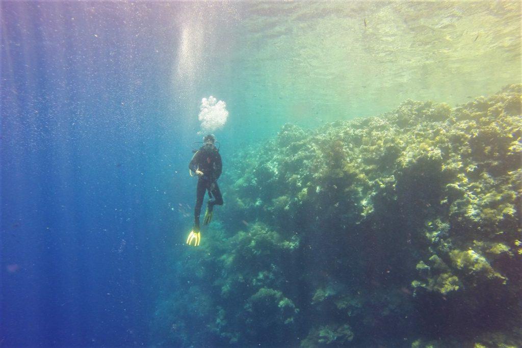 Nurek przy rafie koralowej podczas nurkowania na Palau