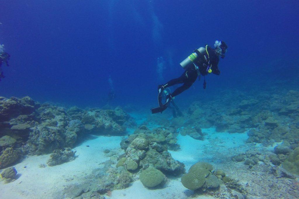 Nurkowanie na palau nurek pod wodą przy piaszczystym dnie