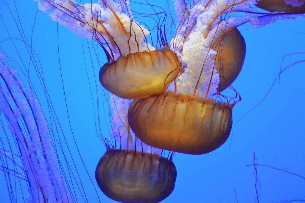 Pływające meduzy