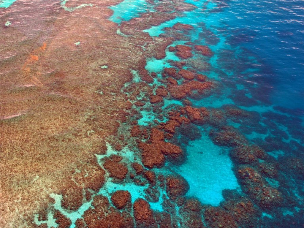 Idealne miejsce na nurkowanie w Australii wielka Rafa Barierowa
