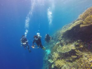 7 powodów, dla których nurkowanie na Borneo to świetny pomysł!